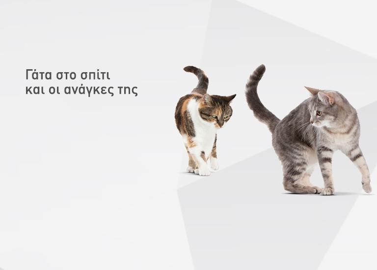 02 mobile 1