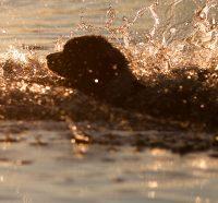 Σκύλοι στην παραλία