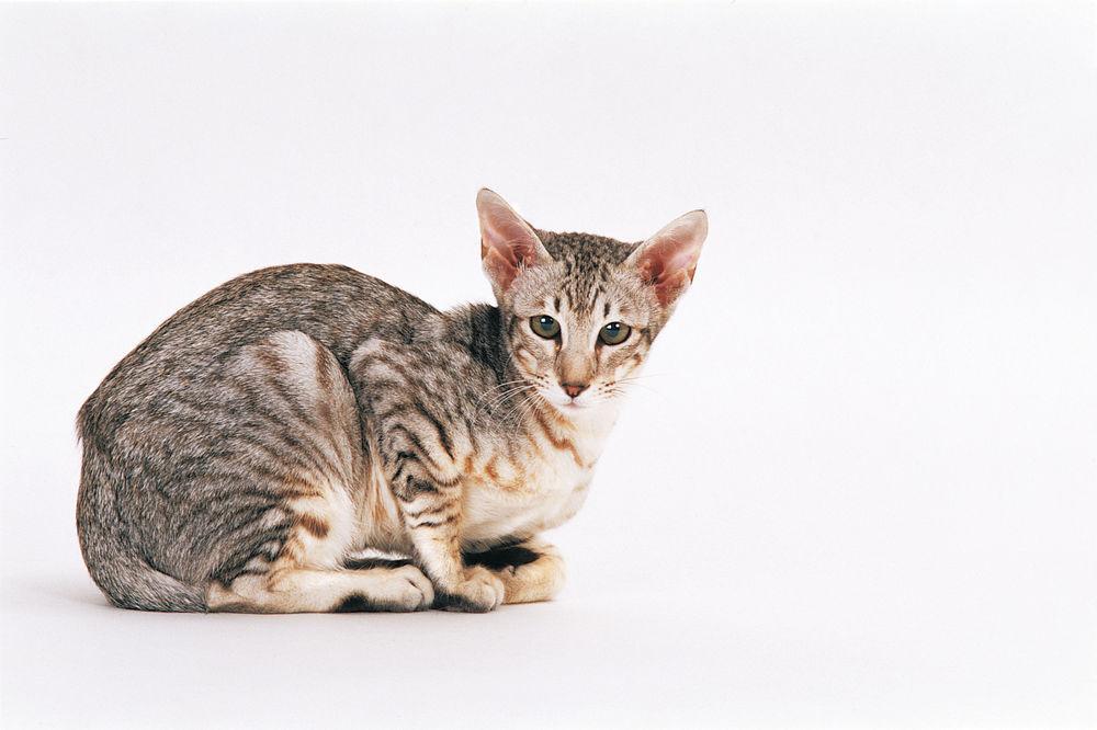 άμμος γάτας Royal Canin