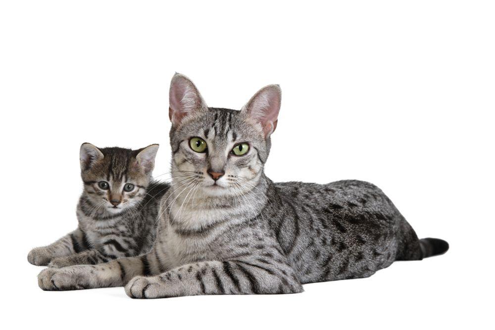 άμμος γάτας Royal Canin Hellas