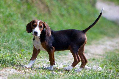Βόλτα σκύλου