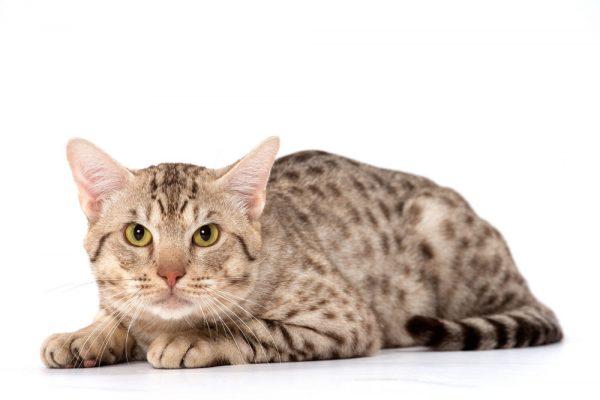 7628589a7cbf Ξηρά τροφή γάτας  Τι επηρεάζει τη γευστικότητα  Μάθετε τα πάντα!