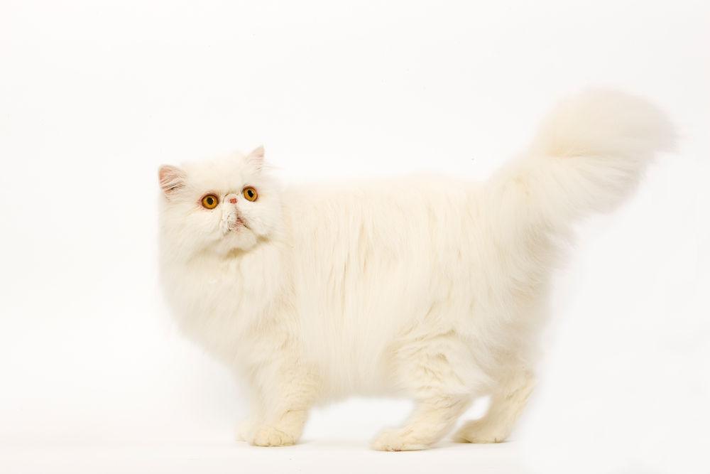 ξηρά τροφή γάτας Royal Canin