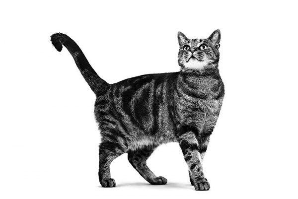 μεταφορά γάτας κτηνιατρείο