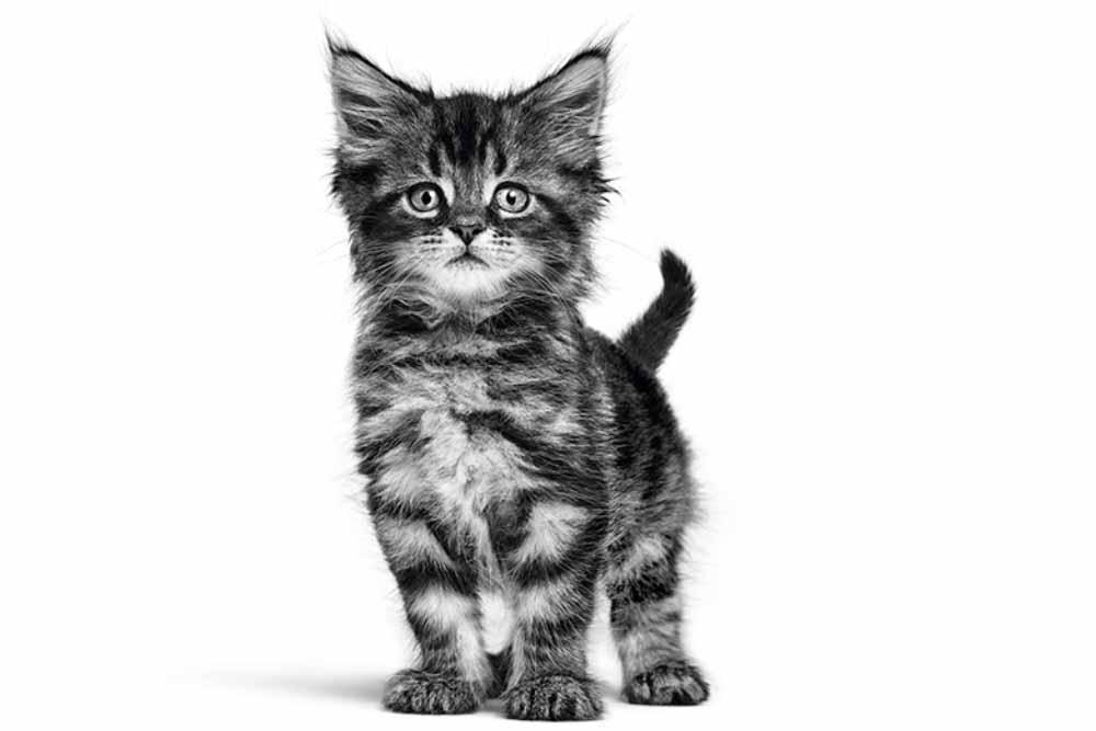 Εκπαίδευση γάτας