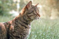 γάτες και συμπεριφορά
