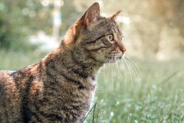 ad55690cd178 Γάτες και συμπεριφορά  Μάθετε τα πάντα και συμβιώστε αρμονικά μαζί