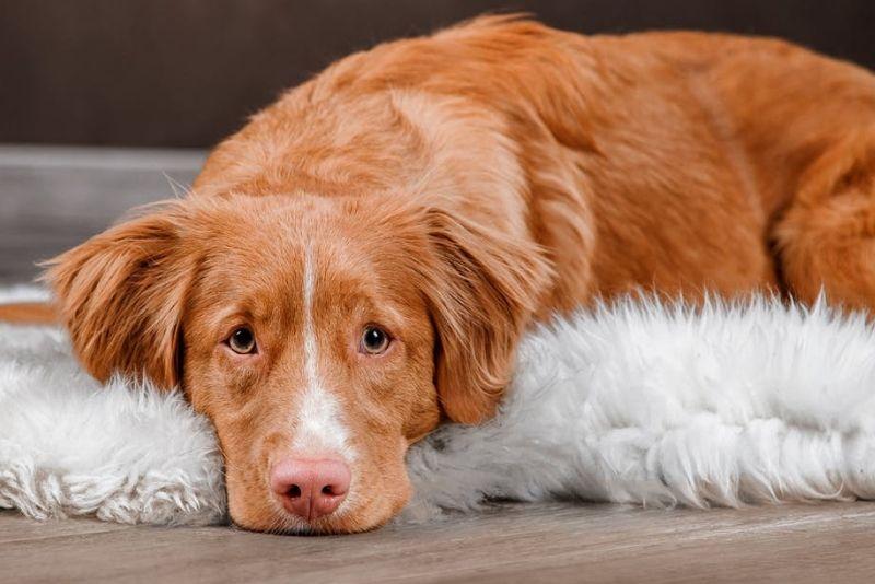 σημάδια ότι ο σκύλος έιναι άρρωστος