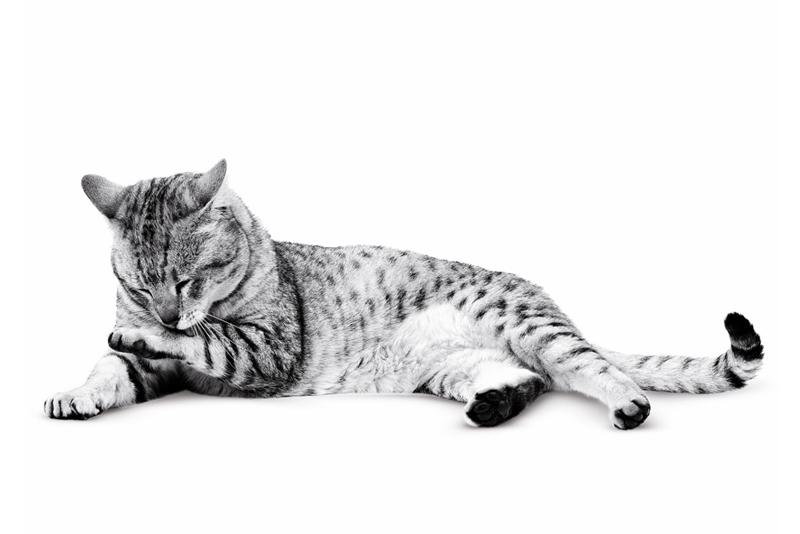 μπάνιο γάτας