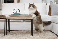 γάτα στο σπίτι κίνδυνοι