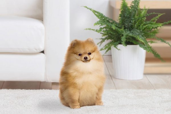 πρώτη φορά σκύλος στο σπίτι